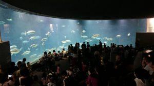 アルファ王子 葛西水族館 画像